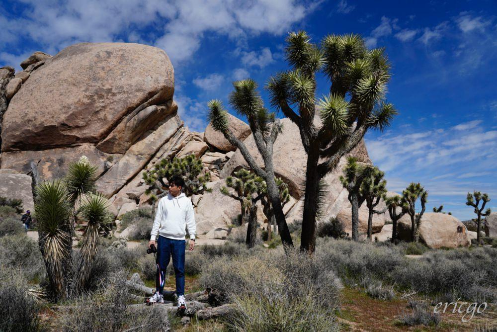 加州|Joshua Tree National Park約書亞樹國家公園 – 充滿療癒生命力的沙漠奇蹟美景,交通方式票價資訊、免費接駁巴士省門票!