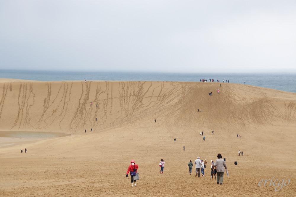 鳥取|鳥取砂丘遊客中心 – 世界唯一風紋模擬機,免費導覽美麗砂丘風紋的形成過程