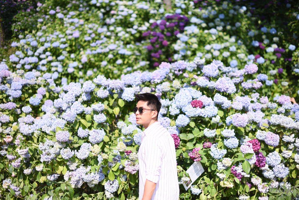 釜山|太宗台繡球花慶典 – 一年一度的釜山粉嫩繡球花海,初夏必訪景點及交通方式