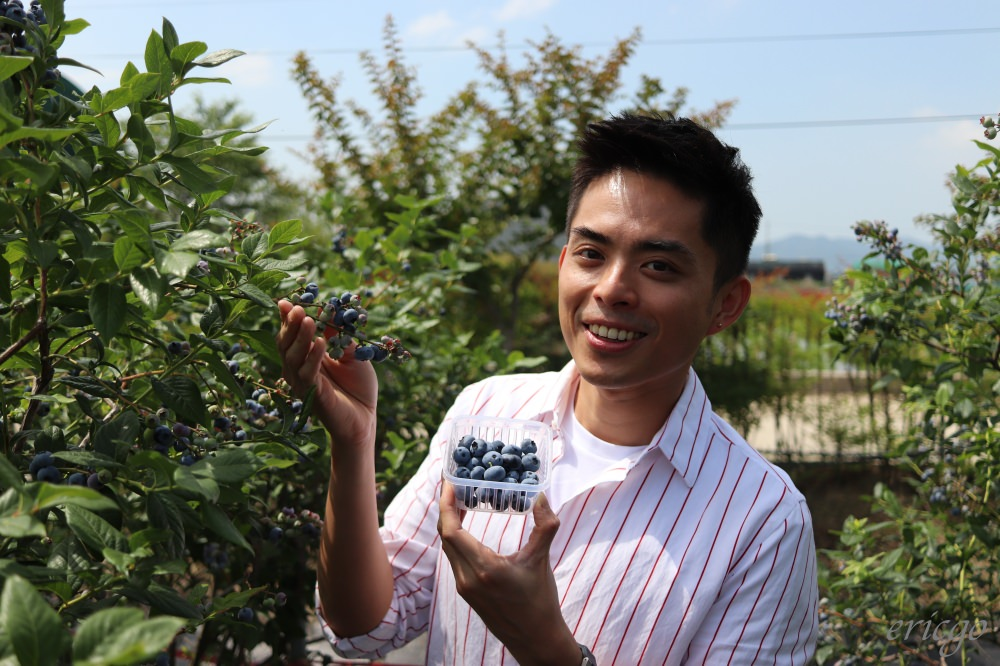 釜山|Duru Farm 採藍莓初體驗 – 釜山竟然可以採藍莓,藍莓冰淇淋DIY超好玩