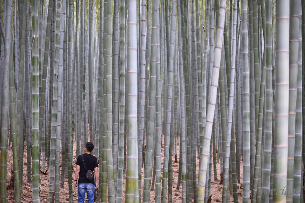 釜山|九頭山竹林 아홉산숲 –  韓國電視劇拍攝景點,走進釜山美麗的竹林深處