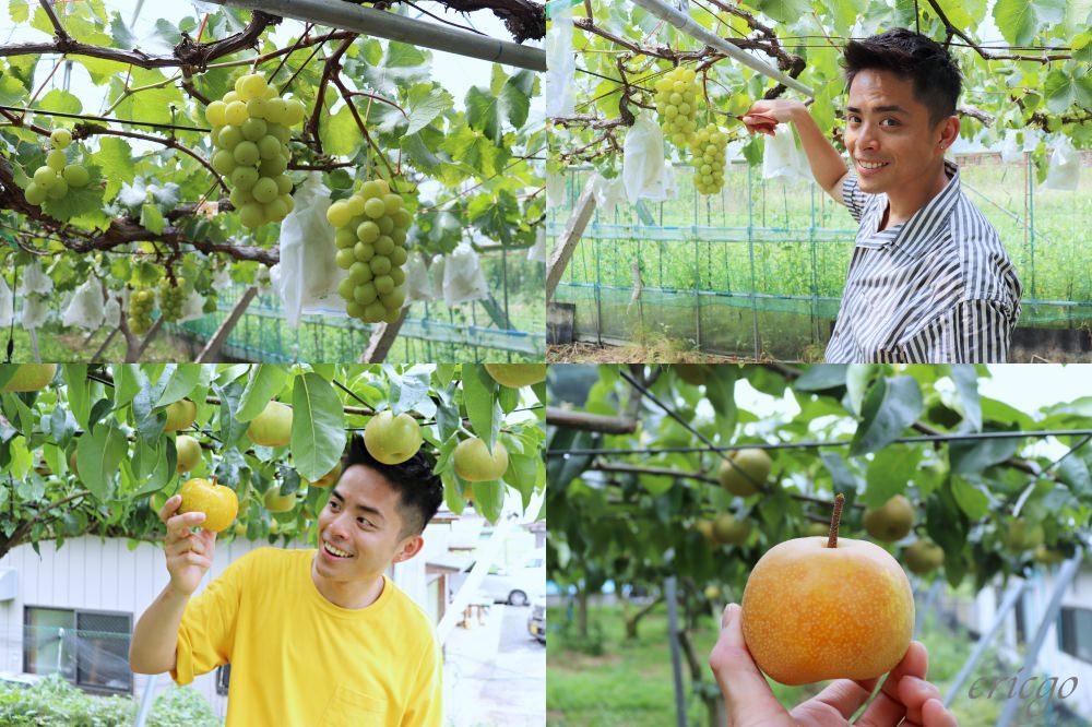 常陸太田|水梨、葡萄 夏季採果體驗 – 茨城行程推薦,常陸太田的水果真的太甜!