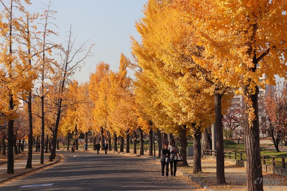 大阪|大阪賞銀杏景點推薦 – 大阪城公園竟然就有隱藏版的絕美金黃銀杏大道!
