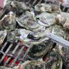 澎湖|海洋牧場 – 澎湖特色美食體驗,海上BBQ新鮮烤牡蠣吃到飽!