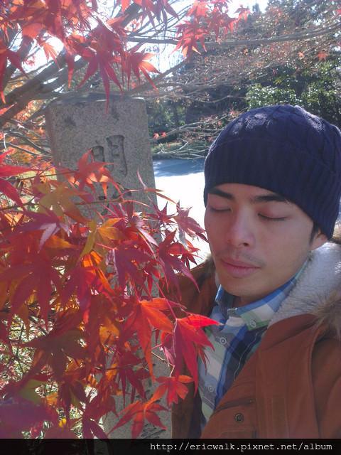 [2012冬-京都] 冬日裡的楓紅 – 在宇治也能看到熱情紅如火的楓葉